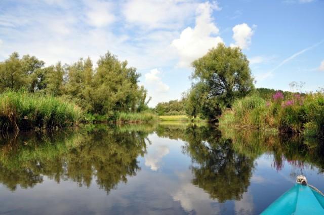 Biesbosch 1